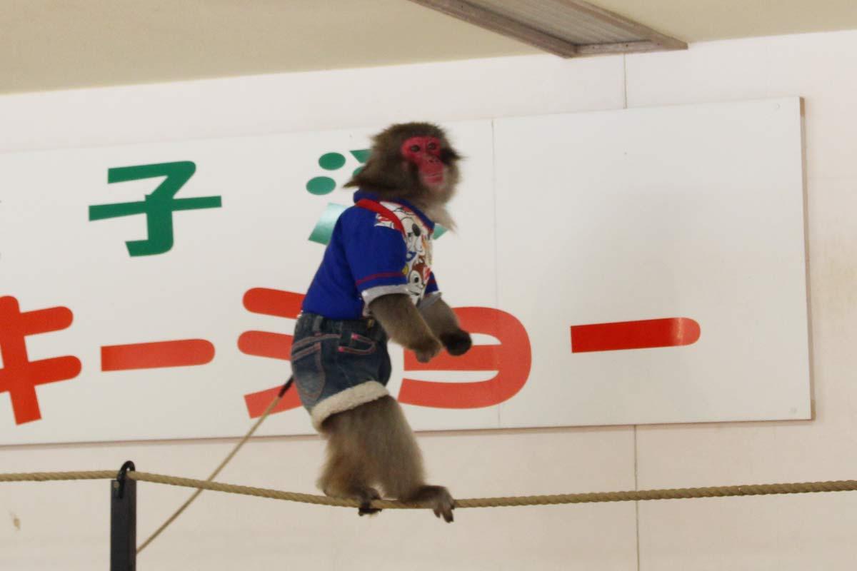 お猿のアイちゃん