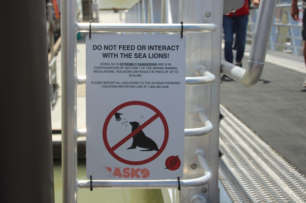 アシカへの餌やり禁止