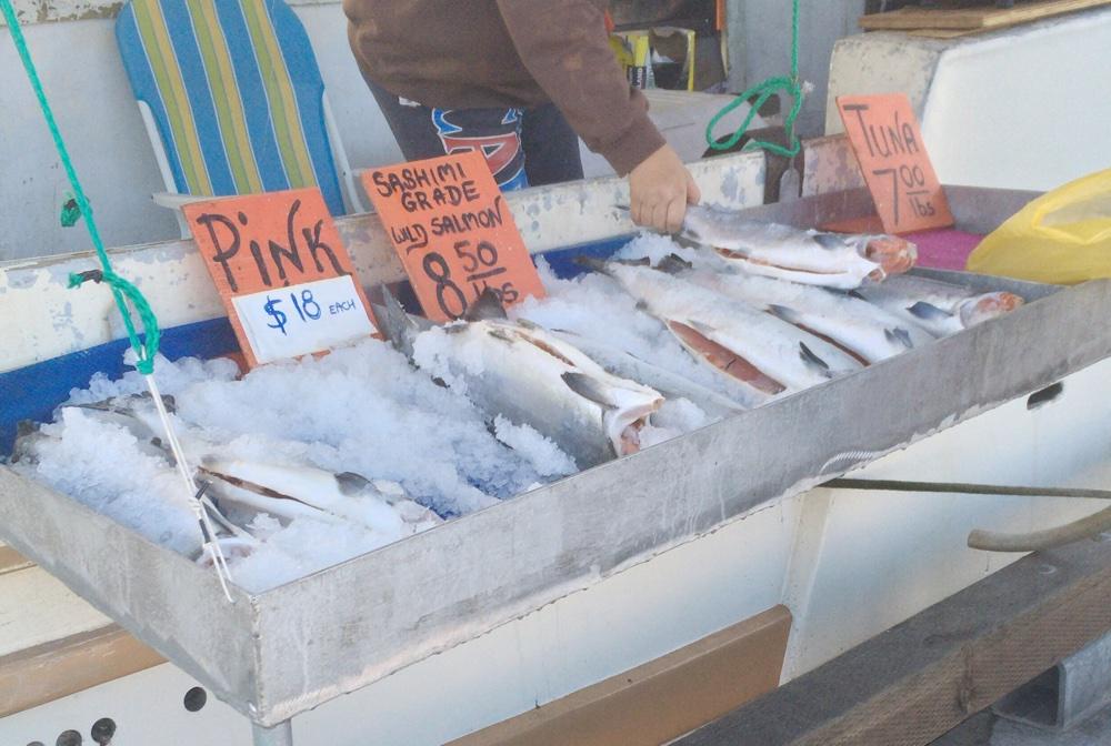 Tuna(マグロ)