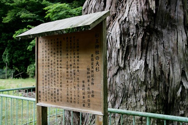 「杉王神社の大杉」という大木があるよ