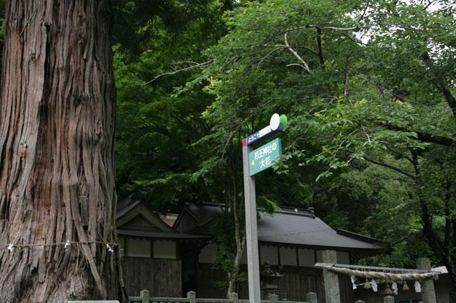 杉王神社の境内に大きな木が!?
