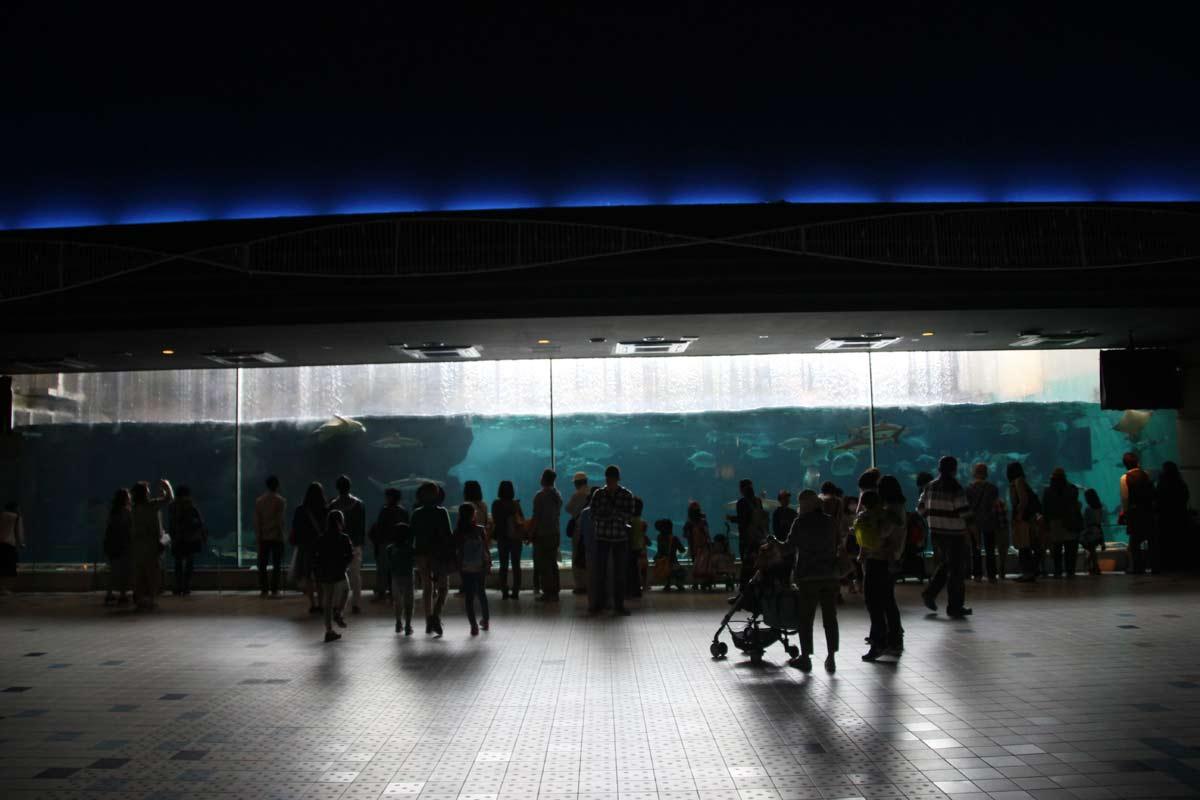 須磨海浜水族園に入るとすぐある大きな水槽