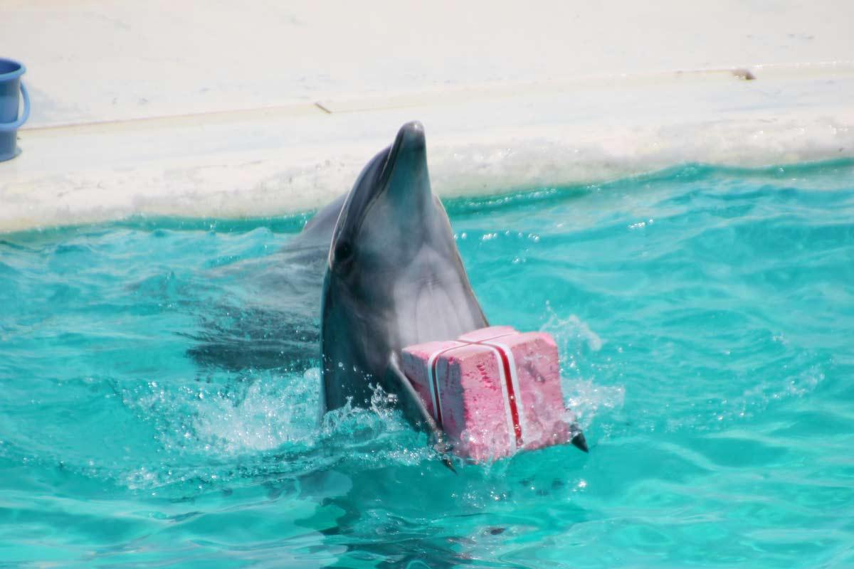 プレゼントを渡しに行くイルカ