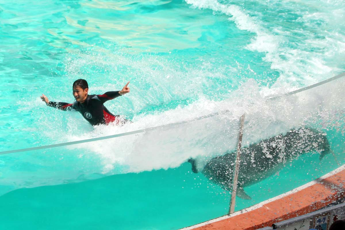 イルカが人間の足の裏を押してハイスピードで泳ぐ!
