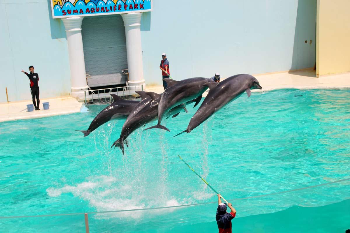 イルカ6頭が同時にジャンプ