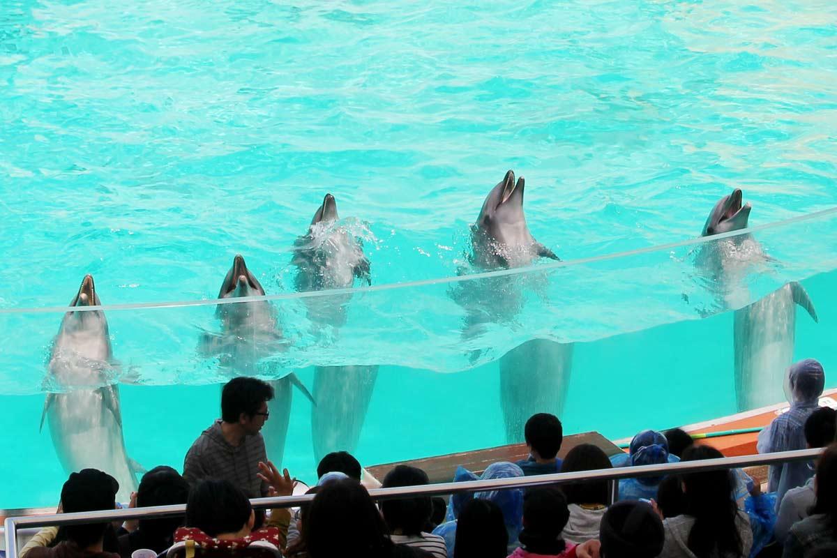 イルカ6頭がそろって挨拶