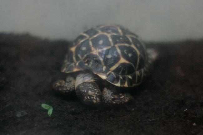亀の赤ちゃんが生まれていました!