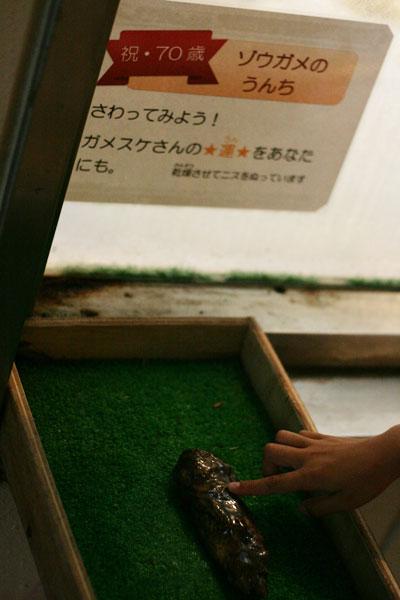 ゾウガメのうんちを触れる