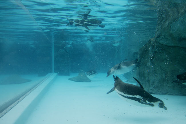 水の中で本領発揮です