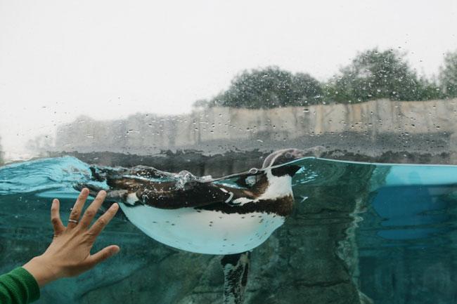 めっちゃ愛嬌のあるペンギンもいるよ