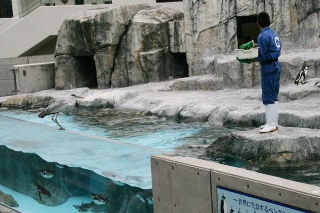 ペンギンの餌やりの時間