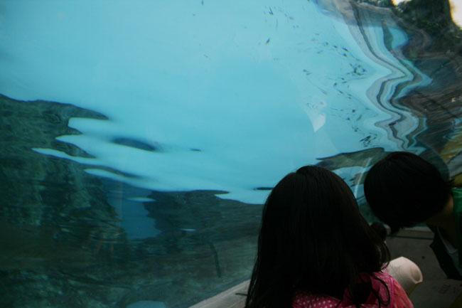 水族館みたいなノリでペンギンを楽しめる