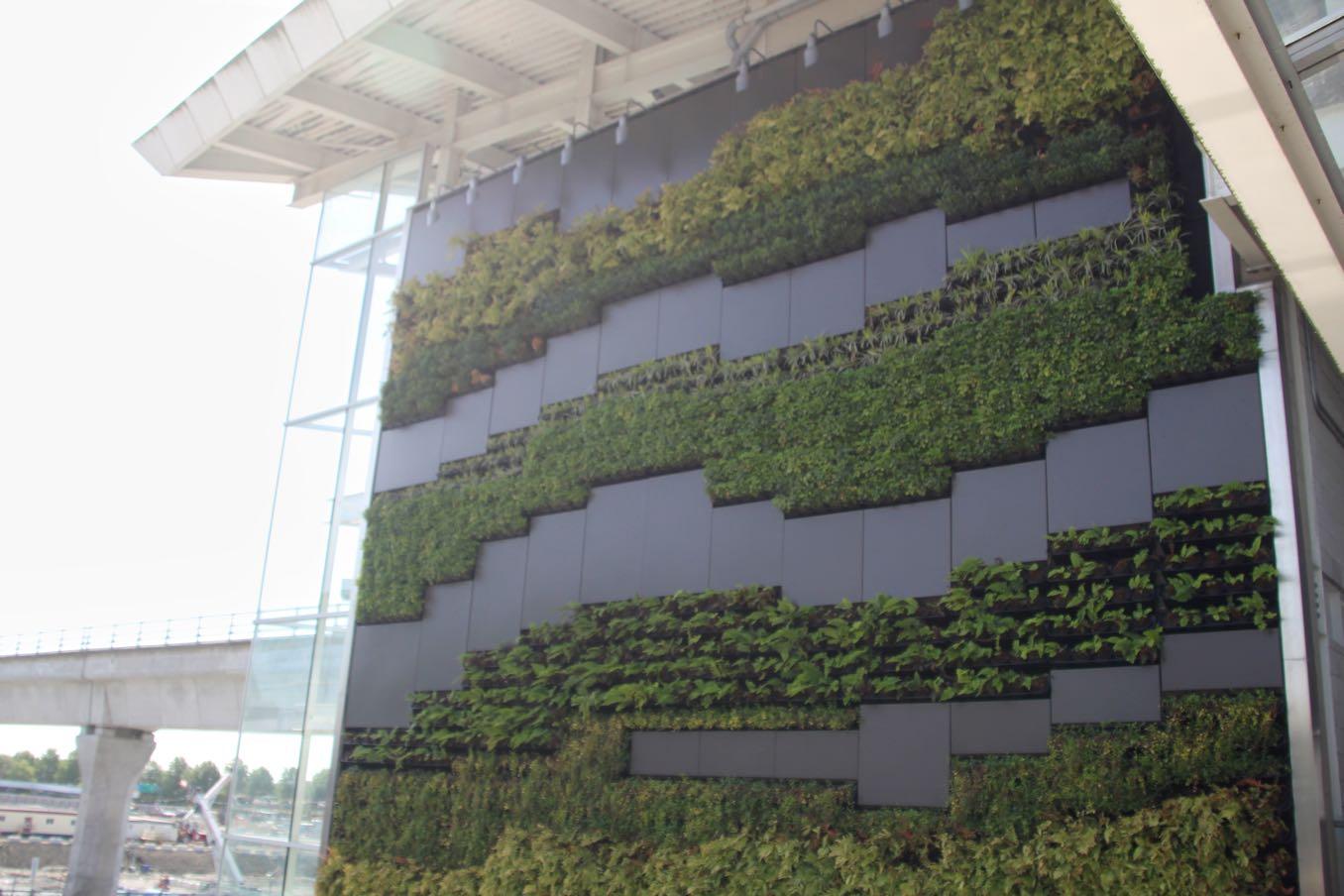 壁から植物が!