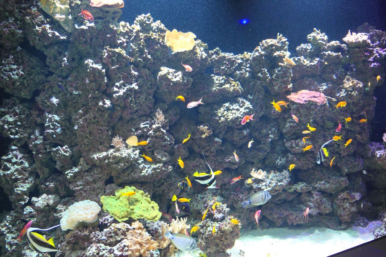 熱帯の海の魚たち