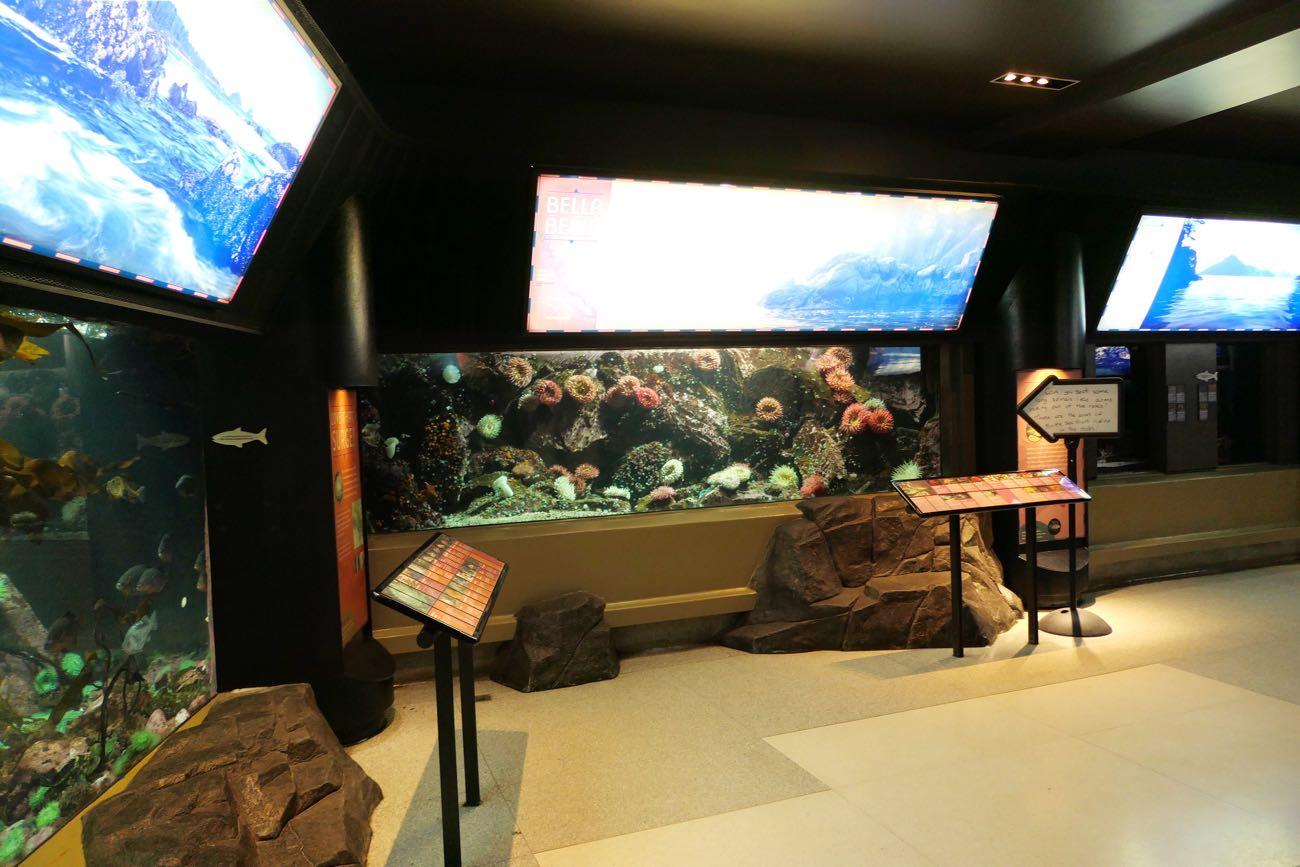 ブリティッシュコロンビア沿岸の魚たち
