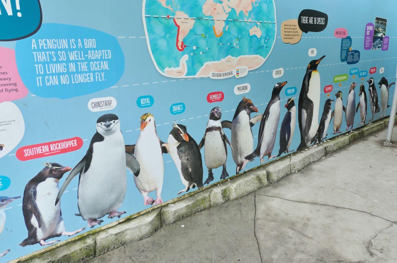 ペンギンの大きさがわかる
