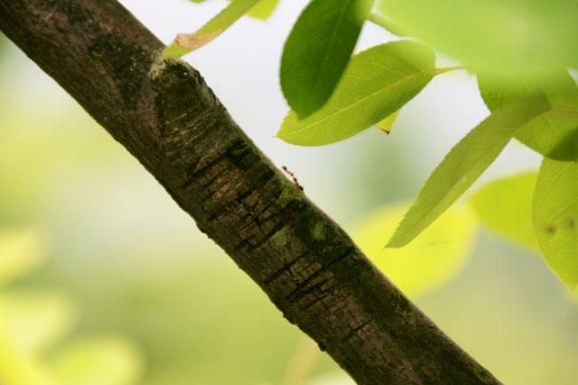 木々や虫もイキイキと