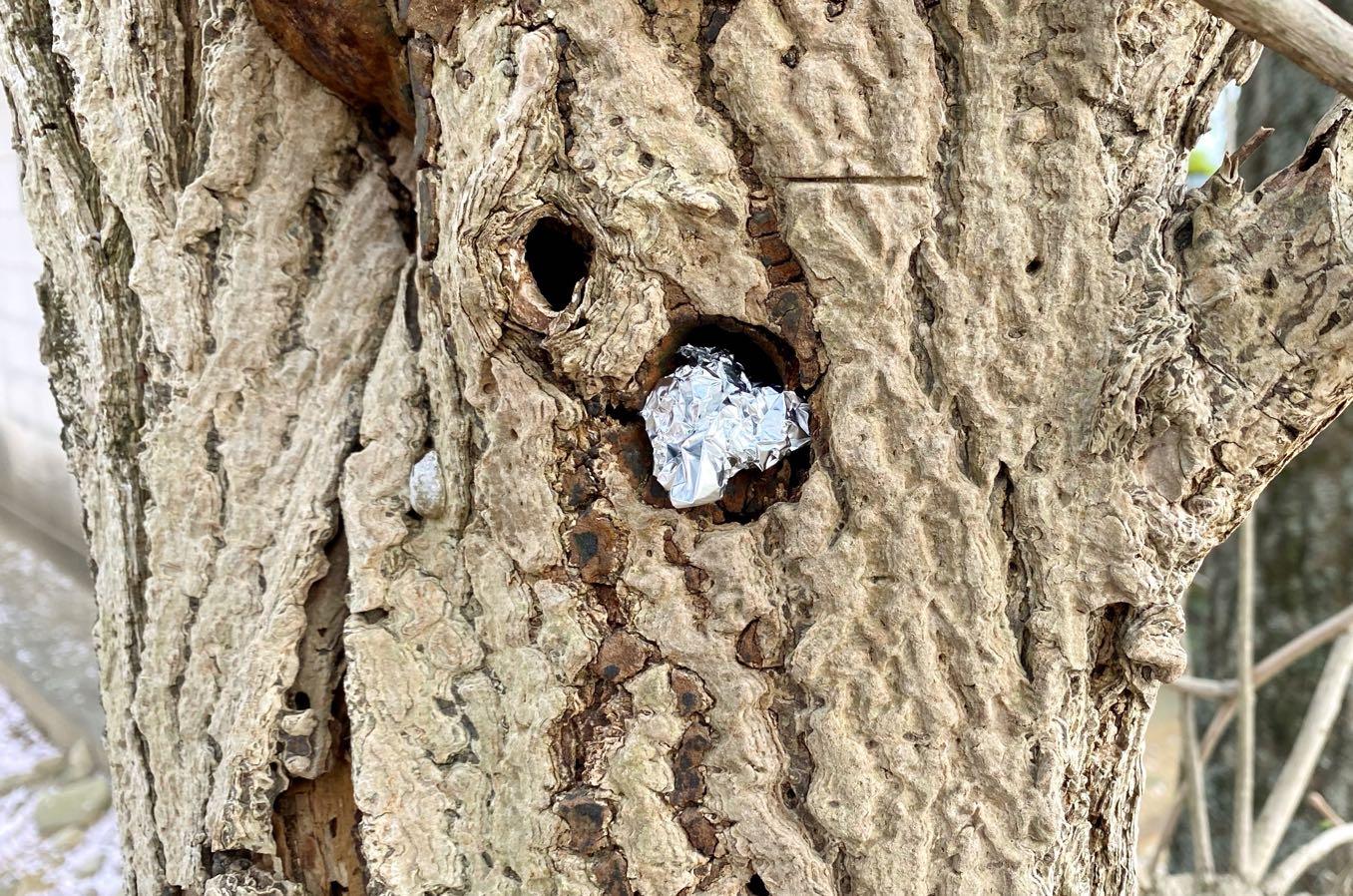 木の穴ぼこに隠す