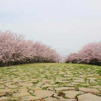 [香川]お花見で青ノ山へ! 瀬戸内海を臨む展望台がイケてます