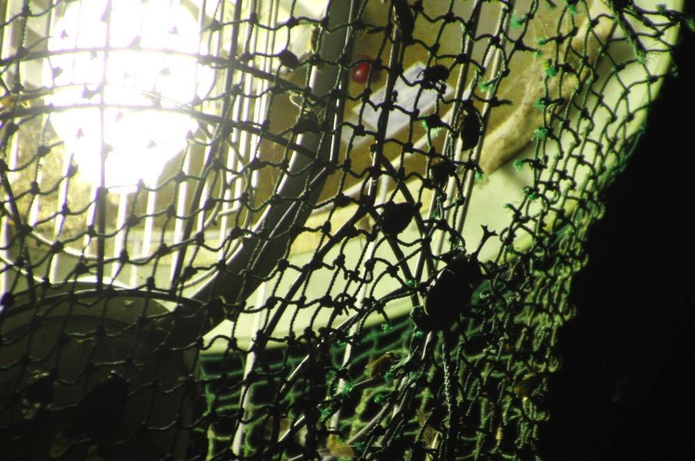 淡路島マンモスの電灯にもふつうにカブトムシがいた!