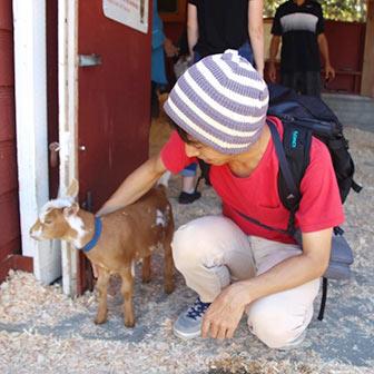 [カナダ]ビーコンヒル・パークの動物園「Beacon Hill Children's Farm(Petting Zoo)」でヤギに触りまくってきた