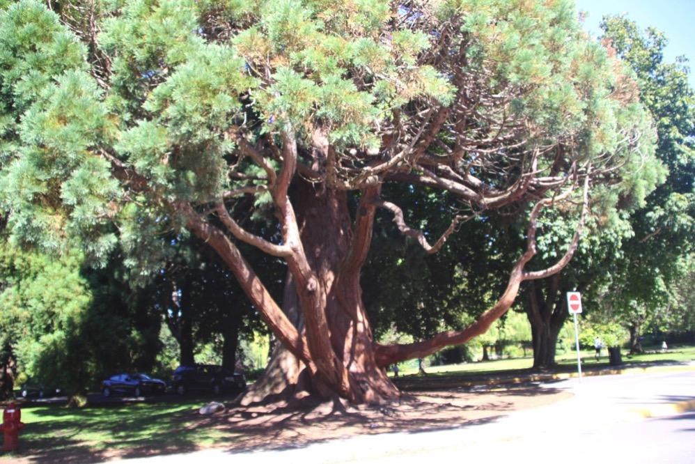 大きな木があります
