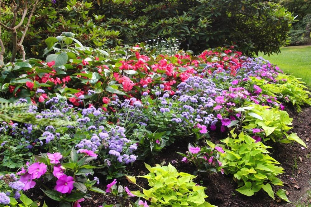 きれいなお花がいっぱい