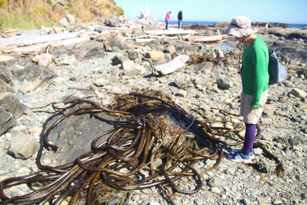 めっちゃ大きな海藻がいっぱいありました