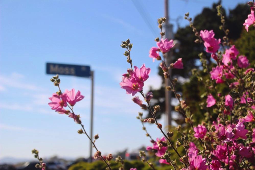 こんなお花が咲いていました(8月)
