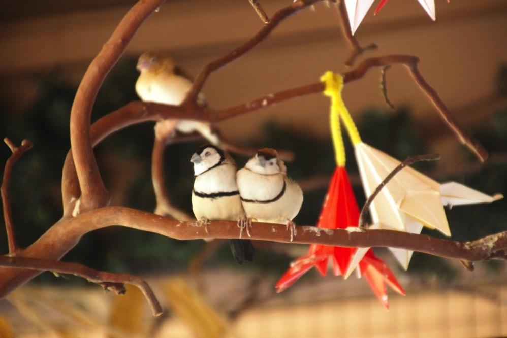 小鳥がかわいすぎる