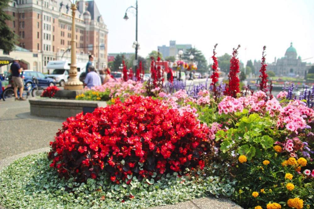 ビクトリアの町中はお花がいっぱい