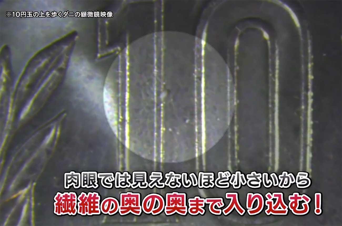 ダニの大きさを10円玉との比較した画像