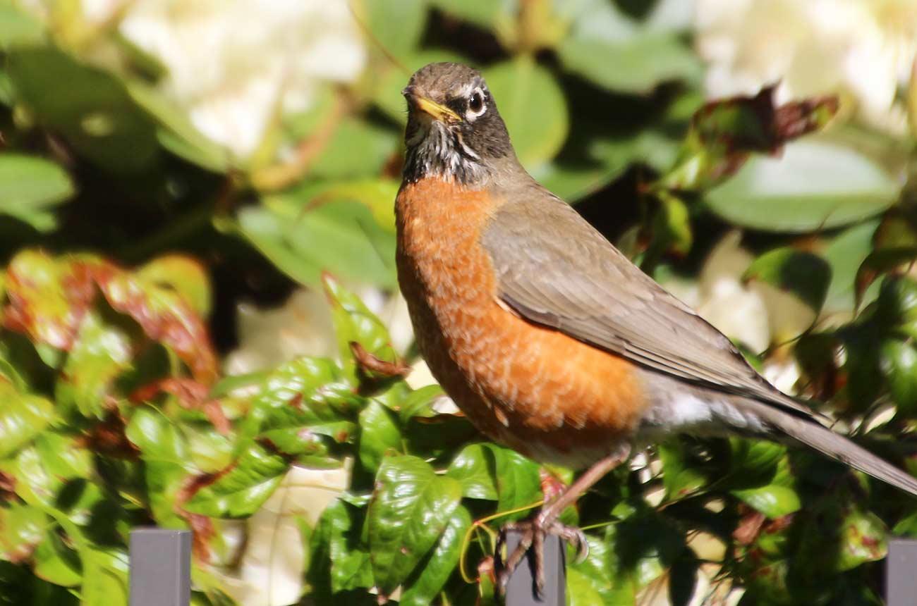 この鳥の名前を知りたい