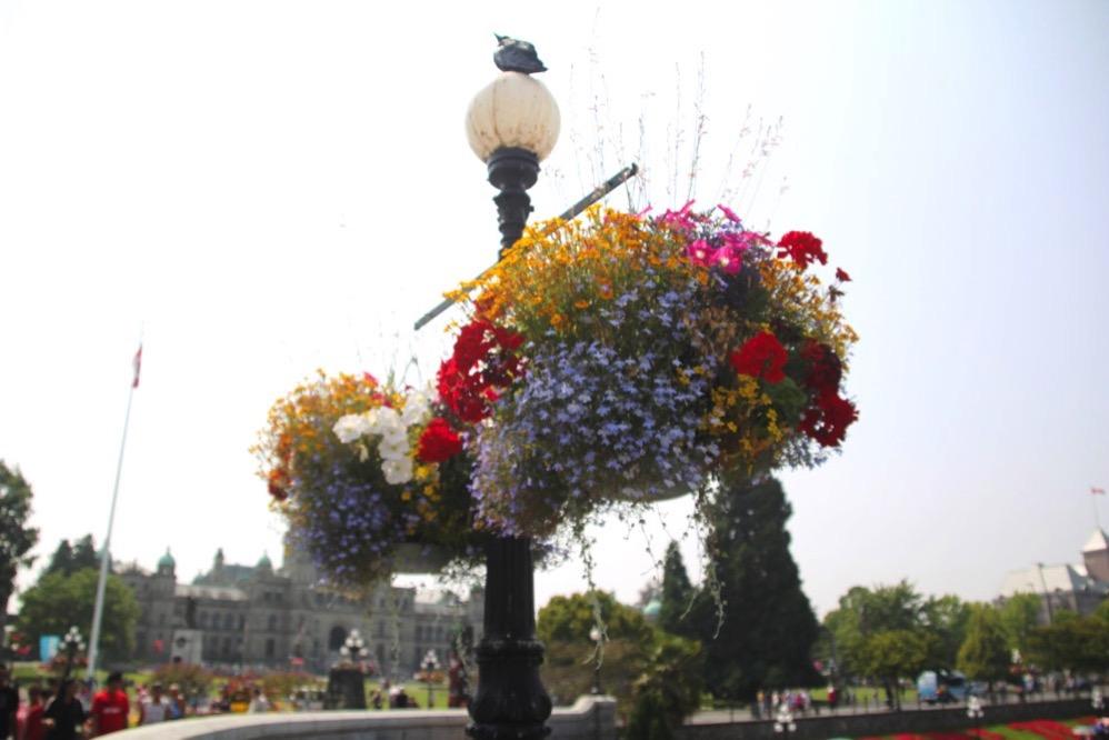 ビクトリアの町中にある街灯にはお花が吊り下げられています