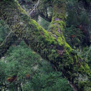 伊勢神宮はパワースポットだとか言われるが行ってみたら「もののけ姫」な森だった!