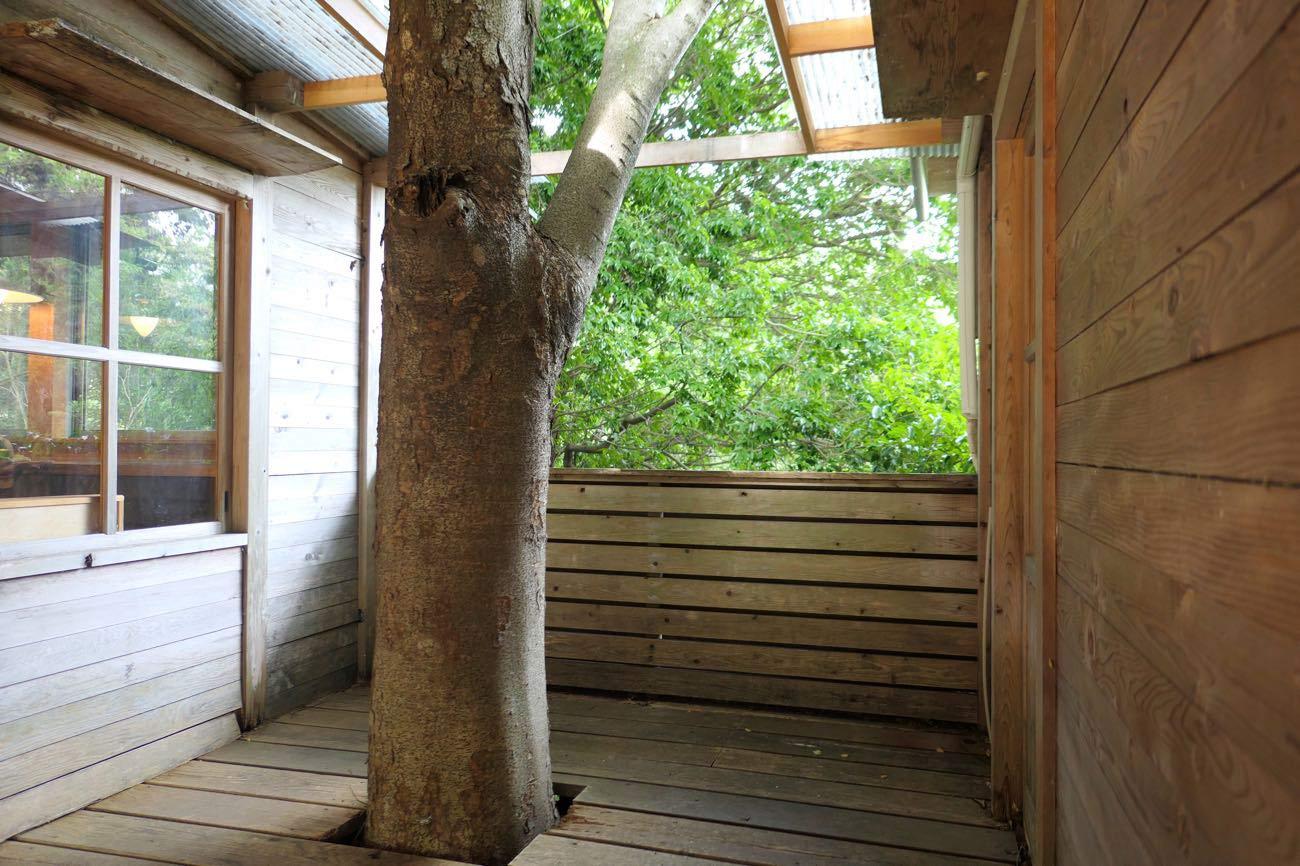 木が生えている
