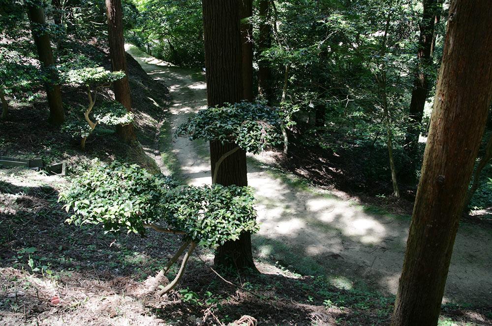 杉の木々の間から小道が見え隠れする「小杉森」