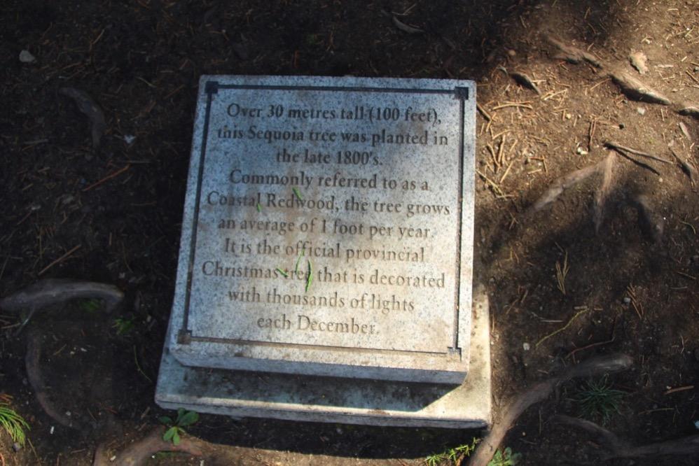 セコイアの木の説明