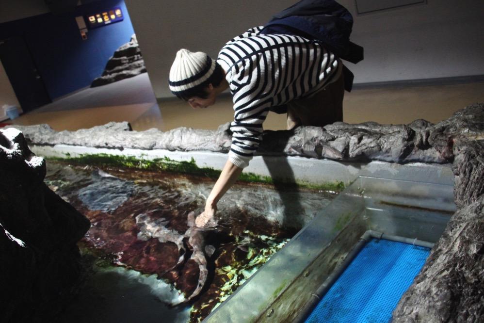 ネコザメを触るヨス