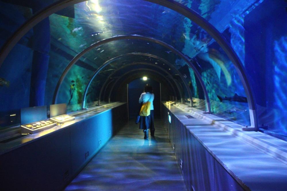 水槽のトンネル