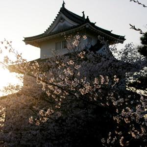 【お花見】丸亀城から見る桜は3度おいしい!? 香川を代表するアレとの共演が見事に…