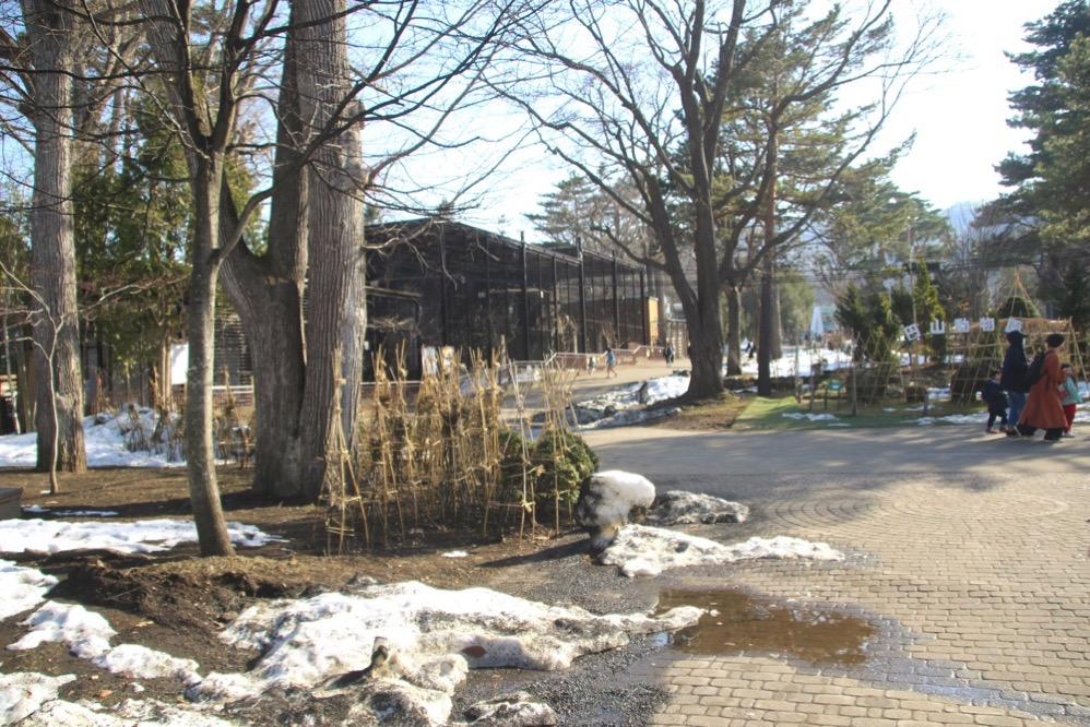 円山動物園のなかにはまだ雪が