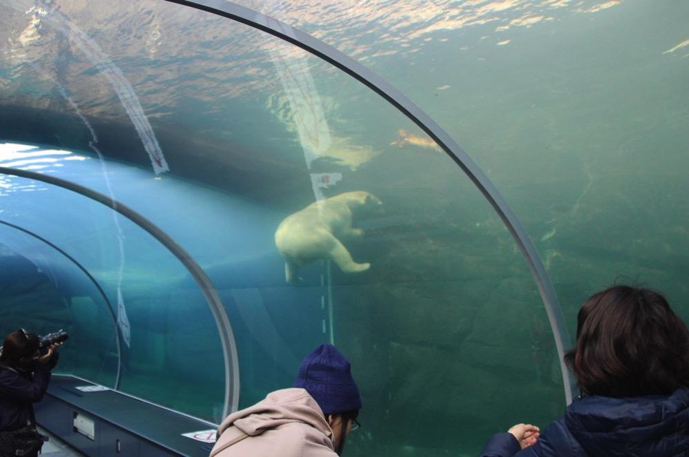 水槽の中にホッキョクグマがいたー
