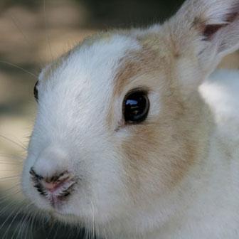 うさぎ島(瀬戸内海の大久野島)でウサギまみれになるためのコツ
