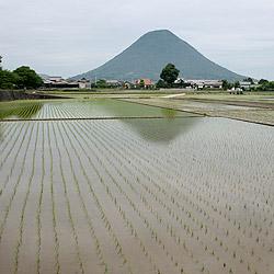 [撮影日記]初夏の醍醐味「水田」を撮ってきました!!(大好きなモチーフ)