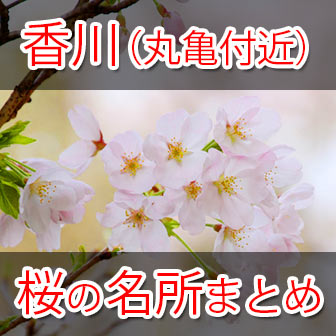 [お花見スポット]香川県丸亀付近でオススメの桜の名所まとめ