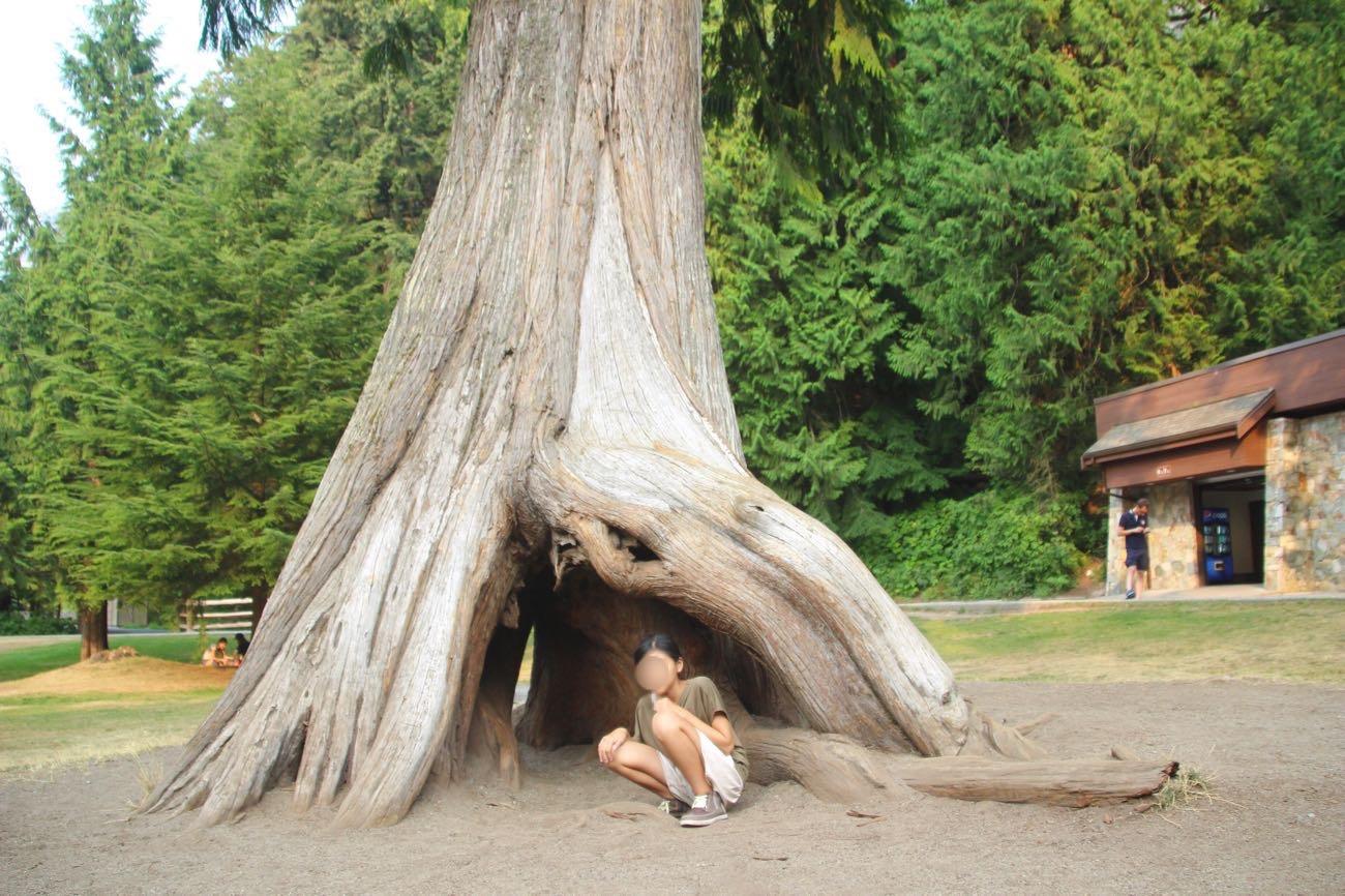 大きな木と空洞が