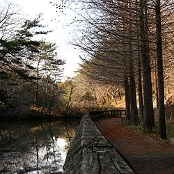 満濃池森林公園の湿地帯を撮影してきました