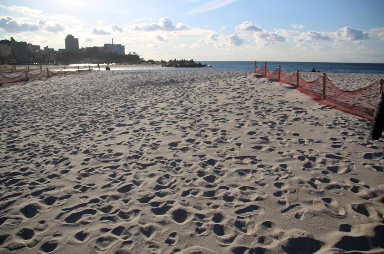 砂の流出を防ぐ「ネット」