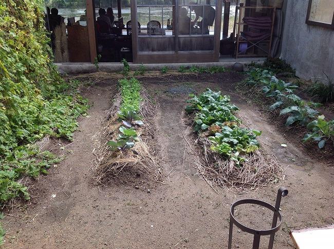 中庭には畑